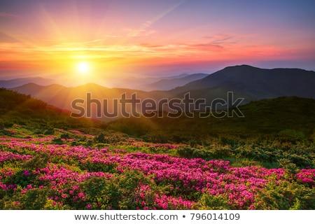 ストックフォト: 美しい · 日の出 · 山 · 花 · 夏の花 · 午前