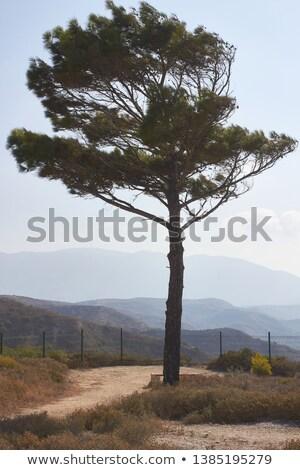 Solitaire arbre sauvage île Grèce ciel Photo stock © AntonRomanov
