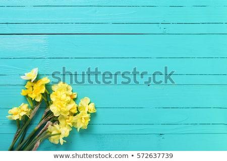 Bunch of Spring Daffodils Stock photo © zhekos