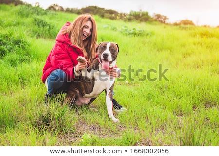 touro · mastim · cachorro · sessão · em · pé - foto stock © mady70