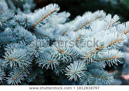 синий · природы · лес - Сток-фото © ava