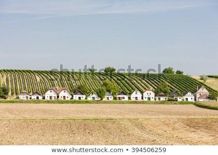 вино виноградник снизить Австрия области архитектура Сток-фото © phbcz