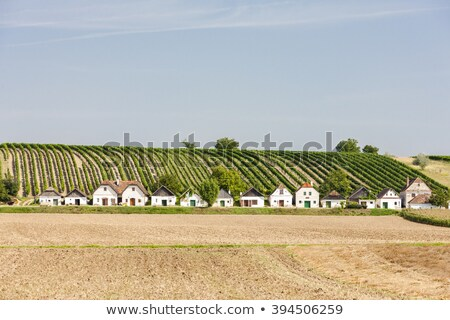 wine cellars with vineyard diepolz lower austria austria stock photo © phbcz