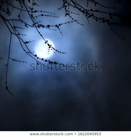 Foto stock: árboles · árbol · forestales · luna · azul