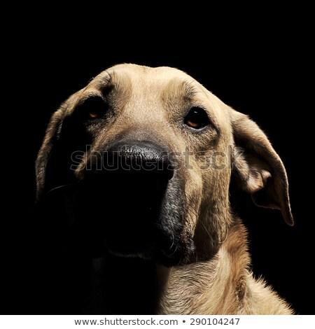 vegyes · fajta · barna · fekete · kutya · mágikus - stock fotó © vauvau