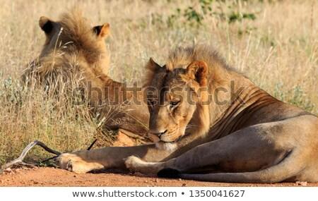 ストックフォト: 2 · 道路 · 公園 · 南アフリカ · 自然