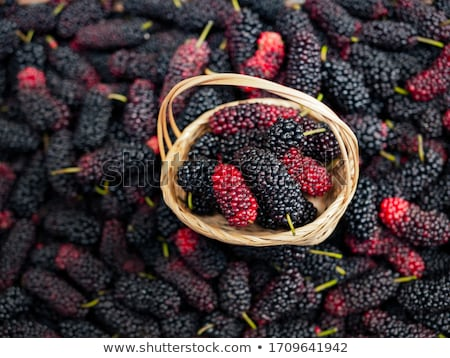 fresh mulberry stock photo © kidza