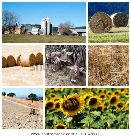 photo collage on agricultural theme stock photo © stevanovicigor