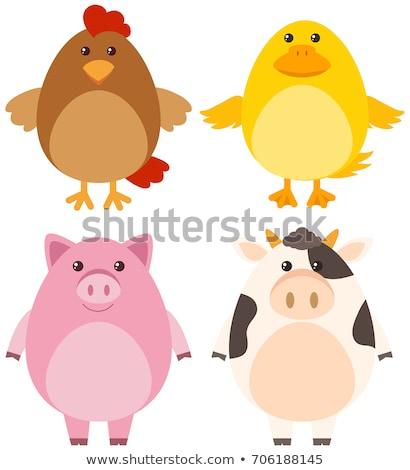Vier verschillend boerderijdieren illustratie glimlach gelukkig Stockfoto © bluering