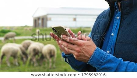 ファーム · ワーカー · 群れ · 羊 · 風景 · フィールド - ストックフォト © monkey_business