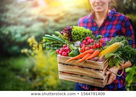 Férfi tart doboz friss zöldségek paradicsom friss Stock fotó © IS2