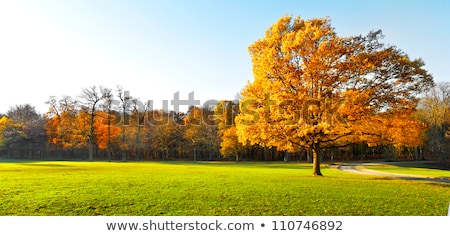 Lonely beautiful oak tree. Autumn Landscape. Stock photo © Virgin