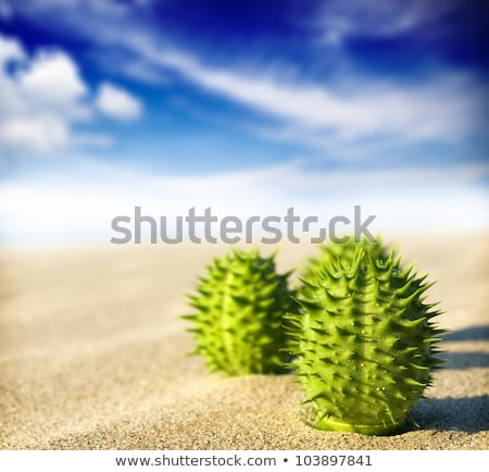 desert with dunes and cactus Stock photo © bluering