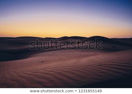 nacht · woestijn · landschap · illustratie · maan · achtergrond - stockfoto © bluering