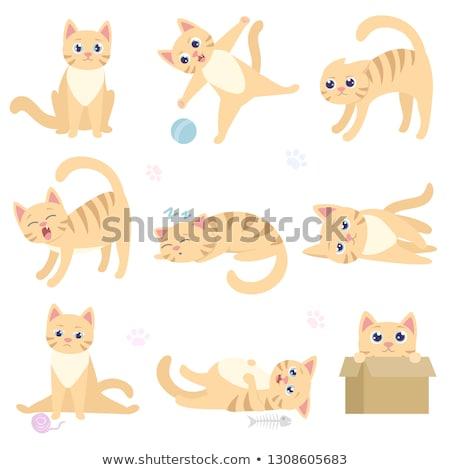 Karikatur Katze versteckt Illustration hinter Zeichen Stock foto © cthoman