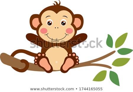 мало обезьяны банан изолированный белый Сток-фото © tilo