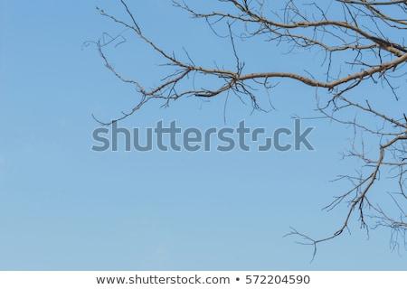 green leaves over blue sky stock photo © karandaev