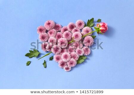 формы · сердца · цветы · изолированный · белый · цветок · сердце - Сток-фото © artjazz