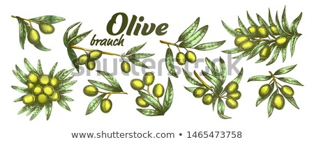 color assortment different olive branch set ink vector stock photo © pikepicture