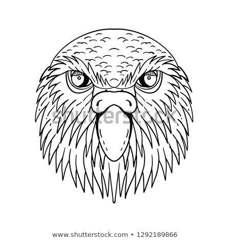 Kakapo Owl Parrot Head Drawing Black and White Stock photo © patrimonio