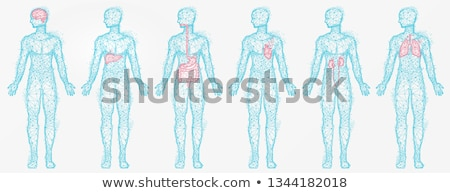 polygonal human profiles of person isolated set stock photo © robuart