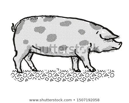 Oxford zanderig zwarte varken ras cartoon Stockfoto © patrimonio
