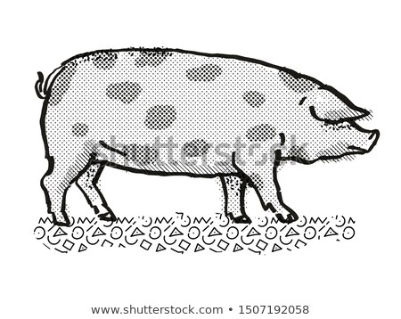 Oxford Sandy and Black Pig Breed Cartoon Retro Drawing Stock photo © patrimonio