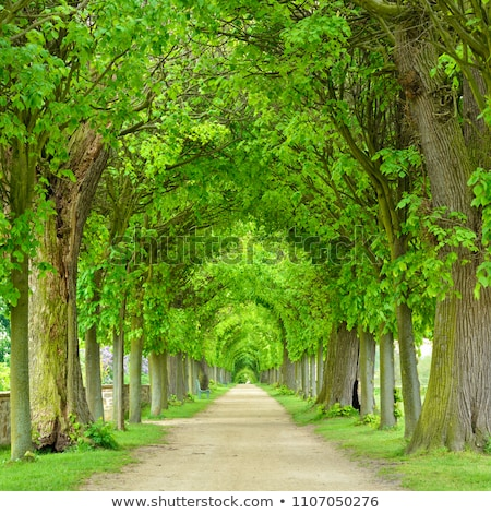 дерево - Сток-фото © CarmenSteiner