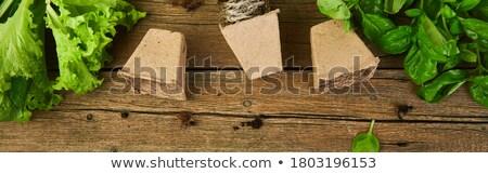バナー 園芸用具 バジル 菜 エコ 植木鉢 ストックフォト © Illia