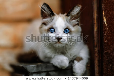 Hajléktalan macska ital víz állatok szürke Stock fotó © joyr