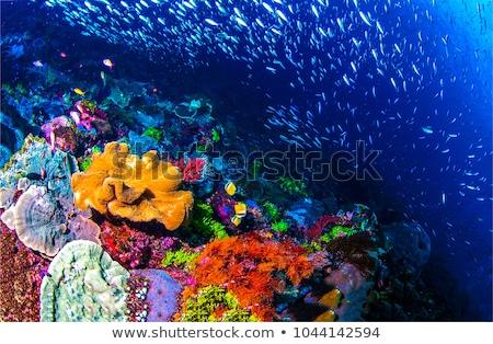 Underwater life landscape. Fish shoal at coral reef ocean underwater Stock photo © galitskaya