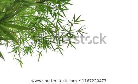 bambu · botânica · parque · natureza · verão · verde - foto stock © ruslanomega