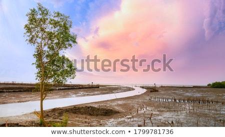 Intertidal Stock photo © Arrxxx