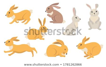 заяц травой поле трава кролик коричневый Сток-фото © devon
