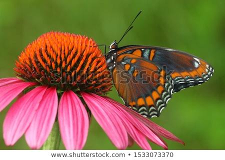 бабочка макроса выстрел Top желтый Сток-фото © macropixel