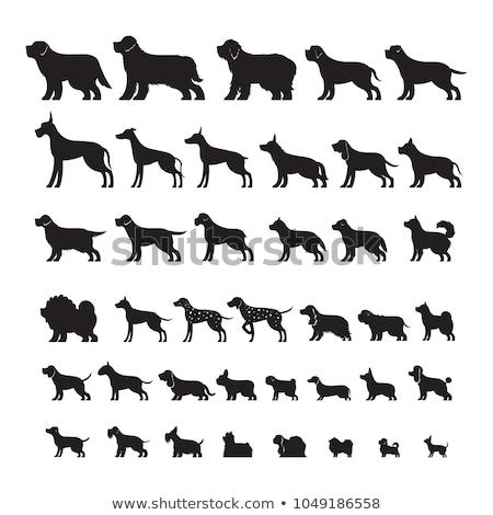 Rottweiler köpek yavrusu portre siyah genç Stok fotoğraf © cynoclub