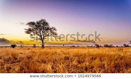 Szavanna afrikai Namíbia tájkép égbolt Stock fotó © ajlber