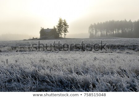 winter morning sunlight and trees silhouettes stock photo © taiga
