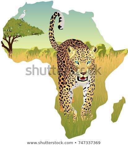 Afrika savan balıkçıl güneş seyahat hayvan Stok fotoğraf © ajlber