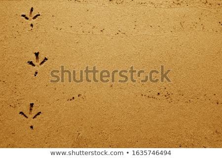 Animal Tracks on Wet Winter Beach Stock photo © eldadcarin