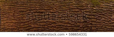 havlama · doku · ağaç · doğa · zaman - stok fotoğraf © dinozzaver