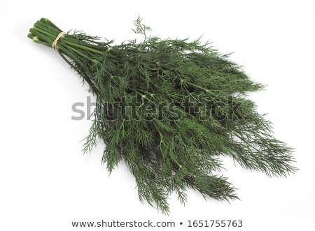 Dill (Anethum graveolens) Stock photo © Stocksnapper