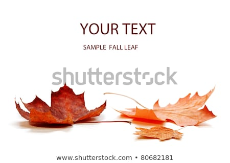 Sonbahar akçaağaç yaprağı makro turuncu ağaç arka plan Stok fotoğraf © ca2hill