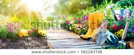 Stock fotó: Gardening Background Set Of Gardening Tools And Gerden Flowers