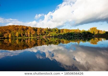 группа деревья идеальный отражение воды лес Сток-фото © jameswheeler