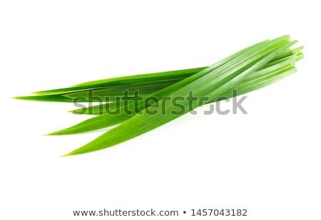 Duftenden Blätter frischen isoliert weiß Palmen Stock foto © szefei