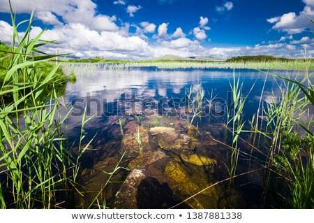 reeds in an irish bog Stock photo © morrbyte