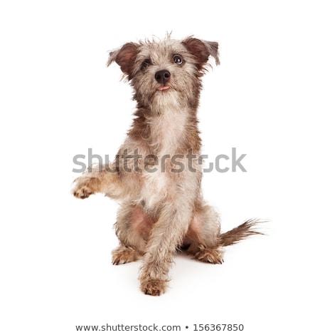 aranyos · fiatal · kutya · virágzó · legelő · virág - stock fotó © kasto