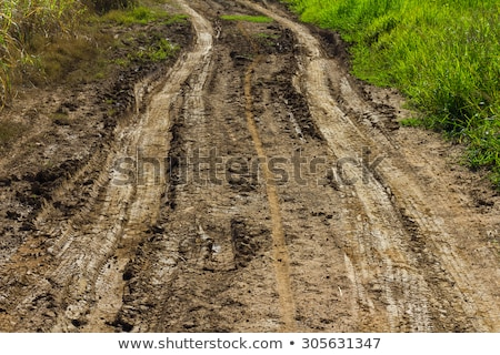 Agricultural tractor tyre track in dry dirt road Stock photo © stevanovicigor