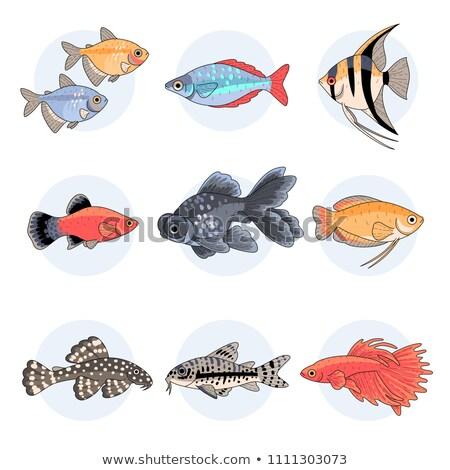 Wektora zestaw słodkowodnych akwarium ilustracja Zdjęcia stock © natalya_zimina